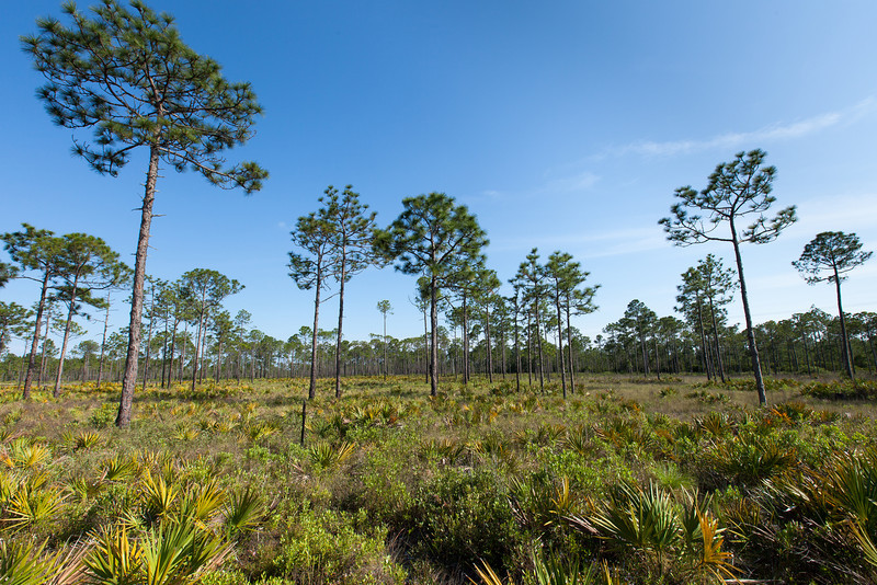 St. Joseph Bay State Buffer Preserve, Florida.