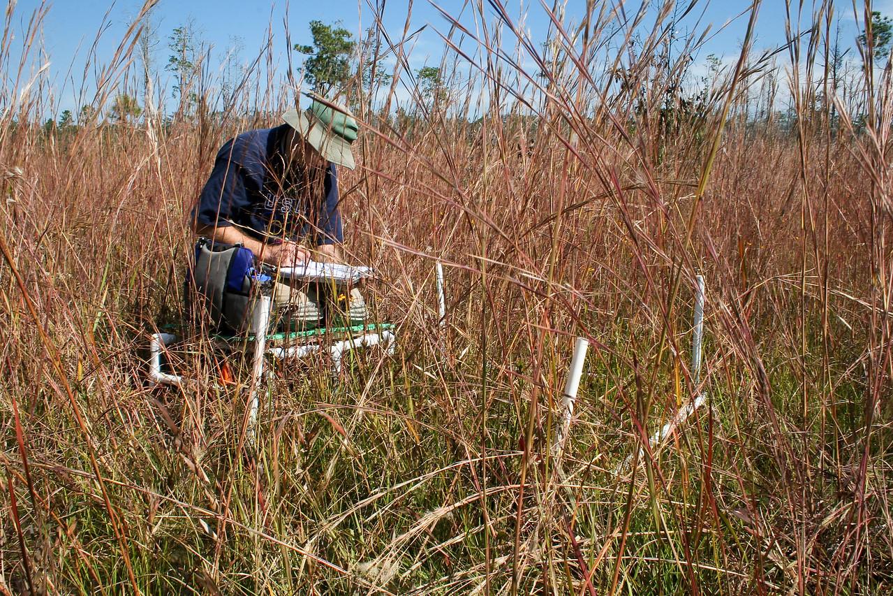 Groundcover Sampling, Abita Creek Flatwoods Preserve, Louisiana
