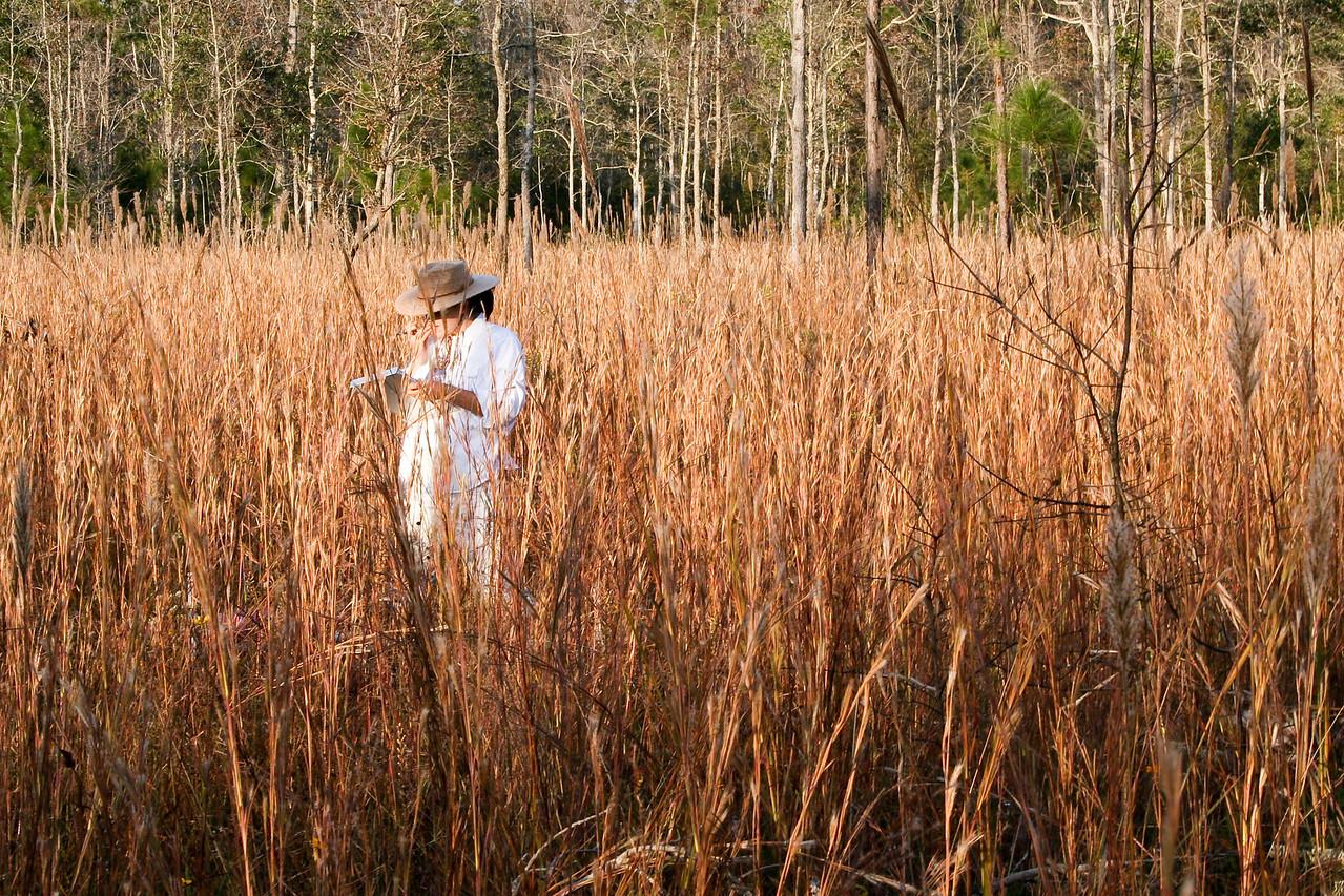 Abita Creek Flatwoods Preserve, Louisiana
