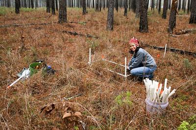 Plot Setup, Camp Whispering Pines, Louisiana