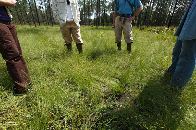 Groundcover Pow Wow, Blackwater River State Park, Florida