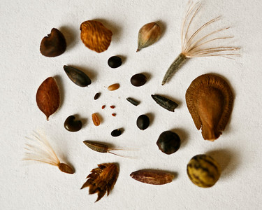Seeds of Selected Groundcover Plants, Camp Whispering Pines, Louisiana