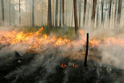 Prescribed Fire, Camp Whispering Pines, Louisiana