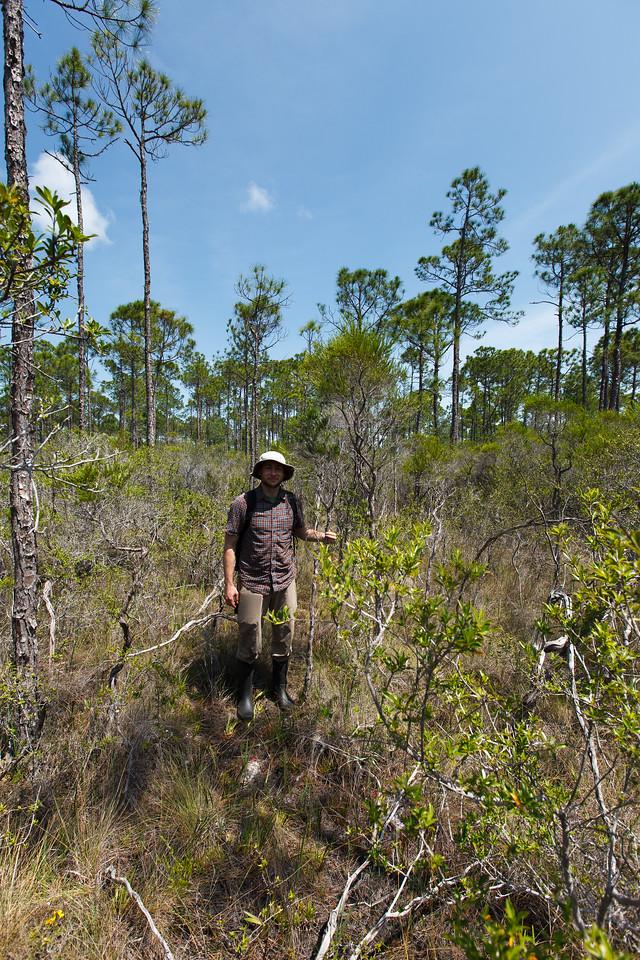 St. Johnswort (Hypericum sp. [Clusiaceae]), St. Joseph Bay State Buffer Preserve, Florida. Photo courtesy of Kyle Harms.