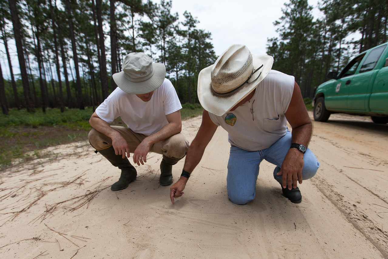 Figures in the Sand, Apalachicola National Forest, Florida