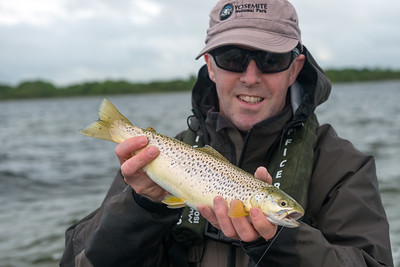 A  Lough Carra brown trout