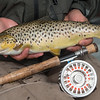 A beautiful Lough Mask brown trout