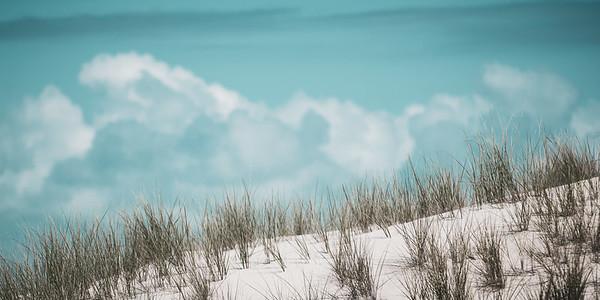 Dune Grass Panoramic