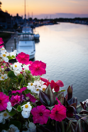 Lewes Canal at Sunset From Above with Flowers
