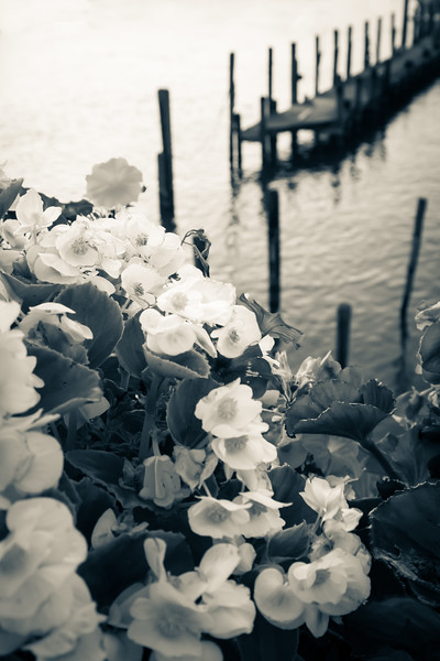 Flowers and Dock on Lewes Canal, Split Tone