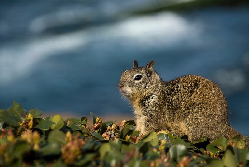 49/365<br /> Squirrel!