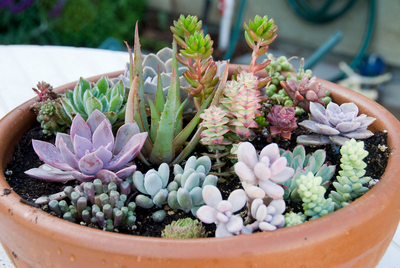 98/365<br /> Succulent bowl I planted with the plants a bought at a farmers market in Feb. See photo #43