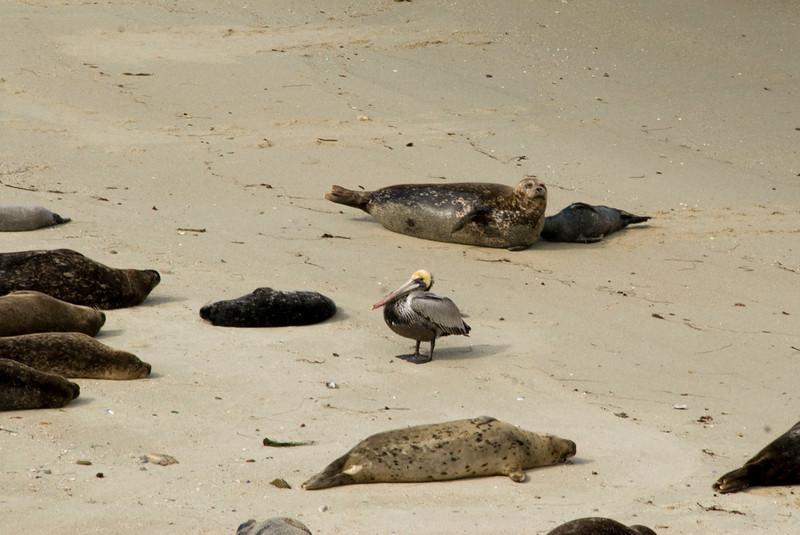 51/365<br /> Intruder on the beach.