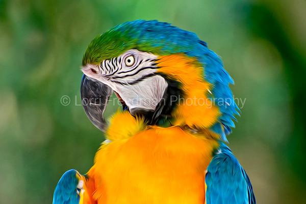 Luminous Birds of Paradise