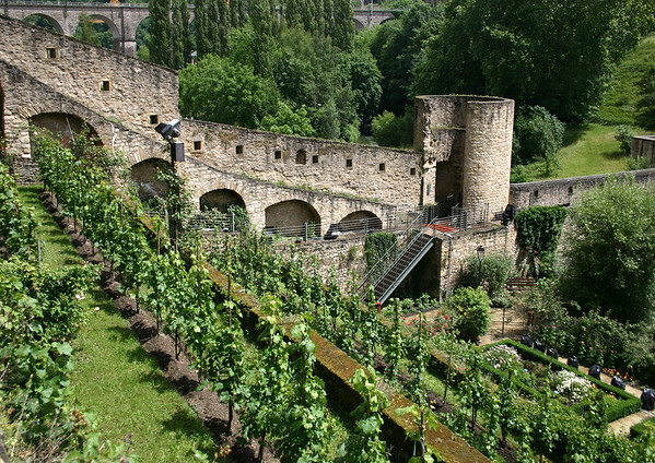 Garden and grape vines, adjacent to the Wenceslas Wall (and tower)