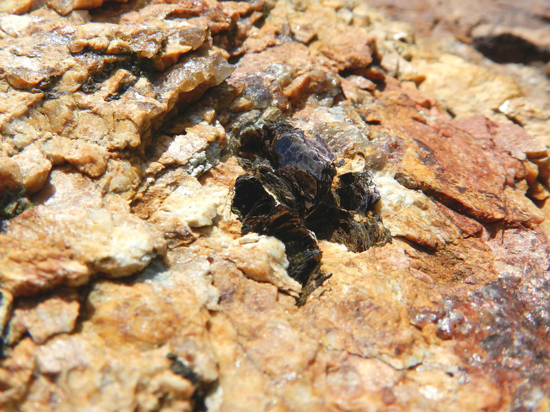 "Maine rocks -- some mica and quartz in the granulitic bedrock invite a contemplation of geology and time. The story of geology begins roughly with a departure from the Book of Genesis as an accurate account of early Earth history.<br /> <br /> '...as if I were<br /> Seeing rock for the first time.  As if I were seeing through<br /> the flame-lit surface into the real and bodily<br /> And living rock.  Nothing strange ... I cannot<br /> Tell you how strange:  the silent passion, the deep nobility<br /> and childlike loveliness:  this fate going on<br /> Outside our fates.' ~ Robinson Jeffers, ""Oh, Lovely Rock"""