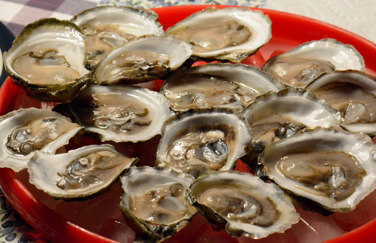"wild Damariscotta River Oysters aka ""Pemaquids"" are some of the best we've ever had.  <br /> <br /> ""But thilke text heeld he nat worth an oyster."" ~ Chaucer"