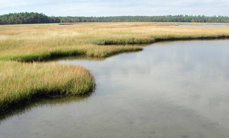 "salt marsh -- what may initially appear to be plain is a factory of lifeforce<br /> <br /> ""Those with the foresight to preserve and treasure even a small part of this heritage will be remembered far longer than those who destroy the rest."" ~ E. O. Wilson"