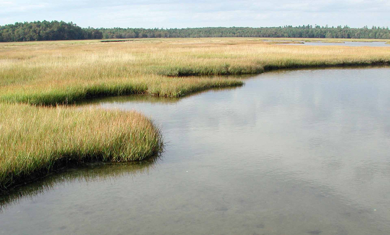 "salt marshes -- what may initially appear to be plain is a factory of lifeforce<br /> <br /> ""Those with the foresight to preserve and treasure even a small part of this heritage will be remembered far longer than those who destroy the rest."" ~ E. O. Wilson"