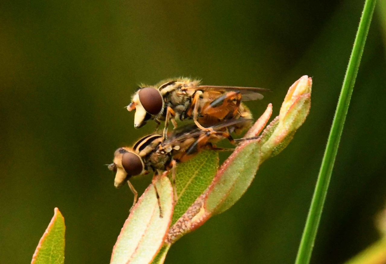 """""""I'd like to be a fly on a scrap of barbecue at THAT party!"""" ~ Lamont Gillispie, speaking not of the Deer/Horsefly Family Tabanidae but of Big Jack Johnson -<br />  Super Chikan family cookouts."""