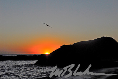 Laguna Beach Sunset and Seagull
