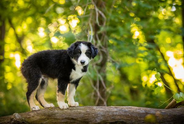 Mac the Pup
