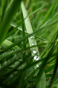 Marching Dewdrops