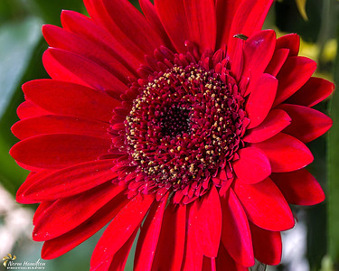 Floral Focus Stacking