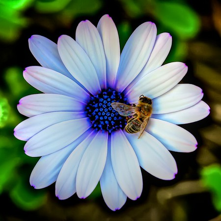 Dead Bee on a Flower