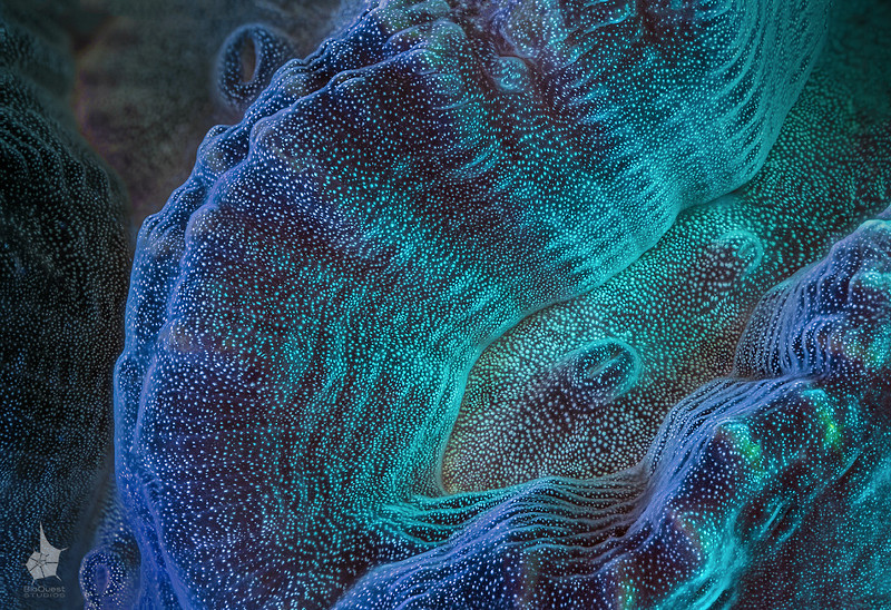 "<p align=""left"">Maze coral surface extreme close-up.  Possibly <i>Pectinia</i> sp.</p>  <p align=""left""><a href=""http://www.microworldsphotography.com/Other/3D-stereo/n-CwqJW/i-fWQJHT3/A""> Side-by-side</a> for those who are comfortable with eye-crossing.</p>"