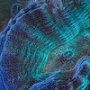 """<p align=""""left"""">Maze coral surface extreme close-up.  Possibly <i>Pectinia</i> sp.</p>  <p align=""""left""""><a href=""""http://www.microworldsphotography.com/Other/3D-stereo/n-CwqJW/i-fWQJHT3/A""""> Side-by-side</a> for those who are comfortable with eye-crossing.</p>"""