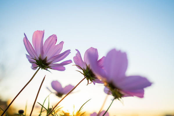 Winter Cosmos