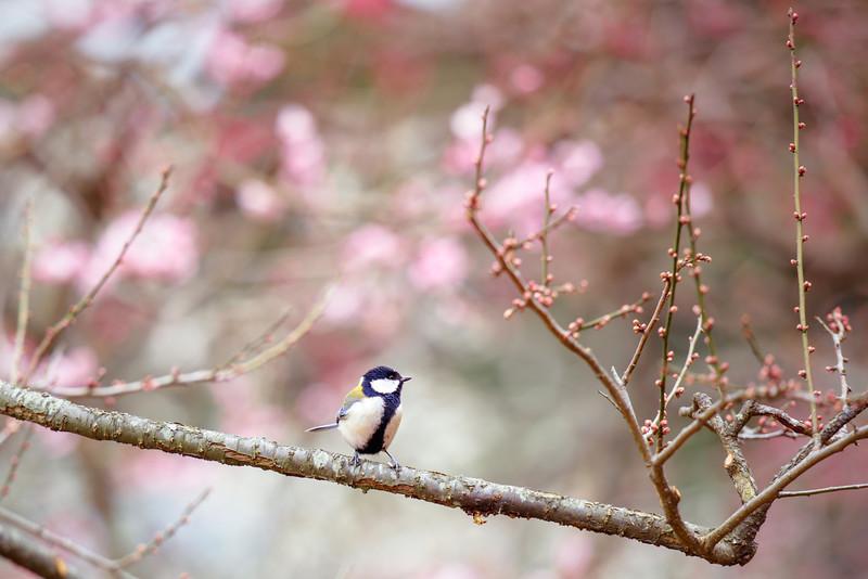 Beckoning Spring