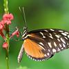 Butterfly Farm, Aruba