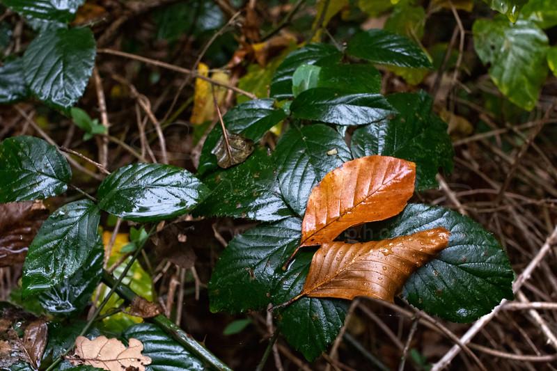 un jour de pluie en novembre | a rainy day in november