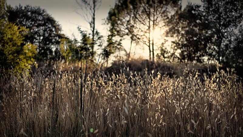 les herbes à contre-jour | backlit herbs