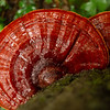 """Reishi In The Rain"""