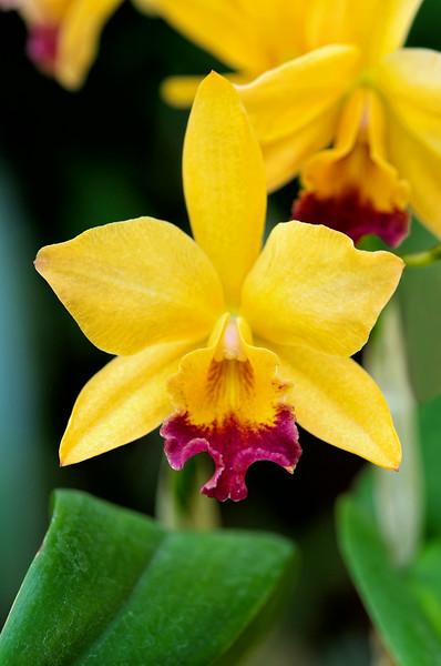 orchid<br /> Fairchild Tropical Botanic Gardens<br /> Coral Gables, FL