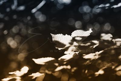 la lumière à la forêt | the light in the forest