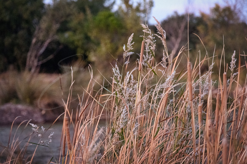 les herbes au soleil | wild grasses at sunset