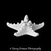 Jungle Starfish II