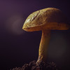 """Ornate-Stalked Bolete"""
