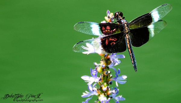 Grasshopper Roaming ... Summer 2014 @  Gibbs Garden, BallGround - Georgia, USA