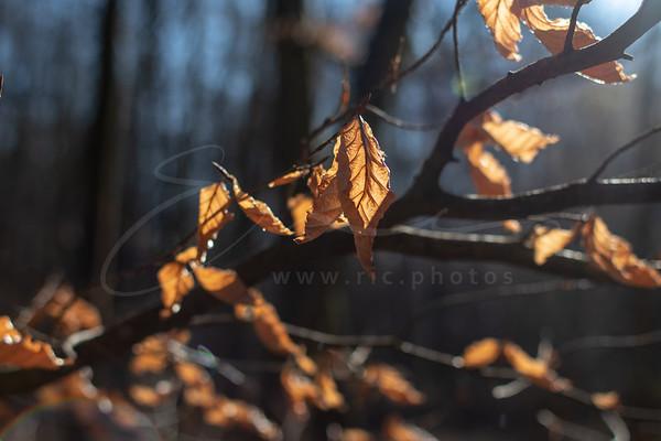 les feuilles en contre-jour | leaves in the backlight