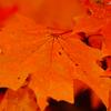 Fall leaves ...