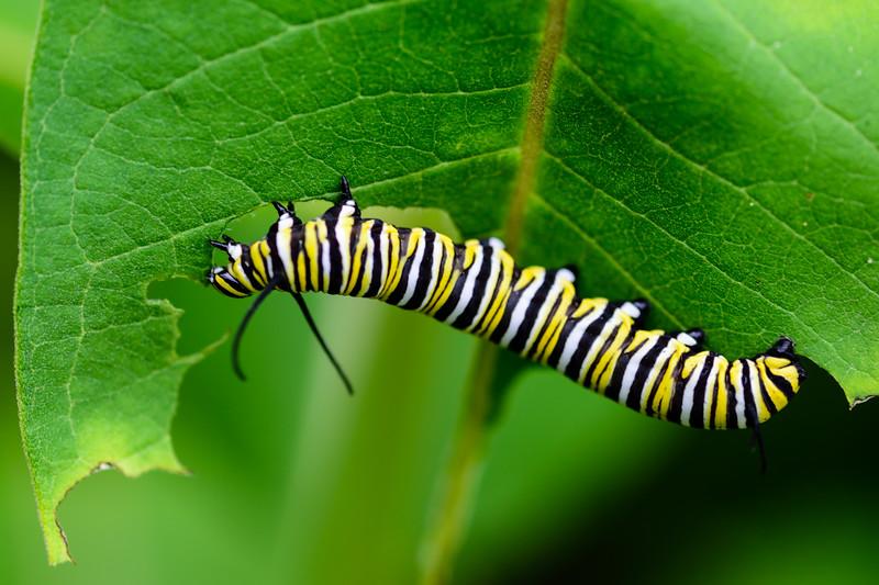 Very hungry caterpillar 01
