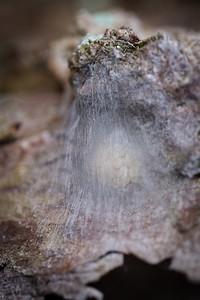 Egg sack