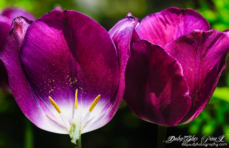 """The Purple Glory"" .... Present and Past embracing together ... @Atlanta Botanical Garden- Atlanta, Georgia - USA"
