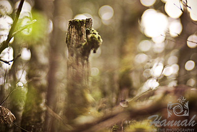 A Chopped Tree with Moss  Shot with the Lensbaby Composer with Edge 80 optic  © Copyright Hannah Pastrana Prieto