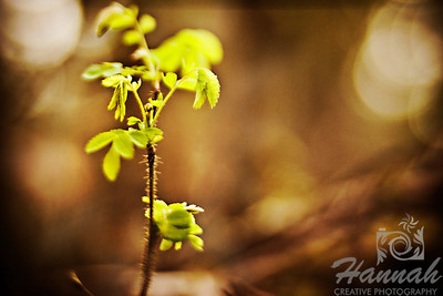 Close-up of a Forest Plant Shot with the Lensbaby Composer with Edge 80 optic  © Copyright Hannah Pastrana Prieto